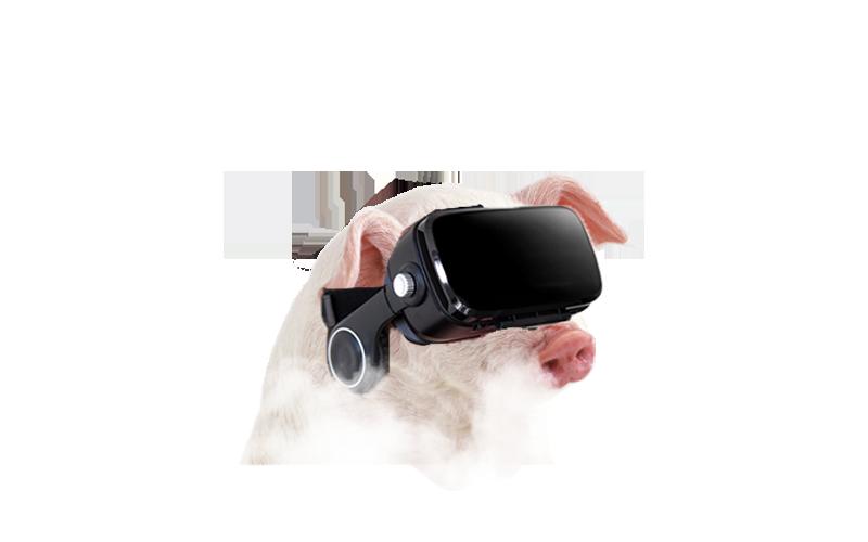 Cerdo con gafas de realidad virtual