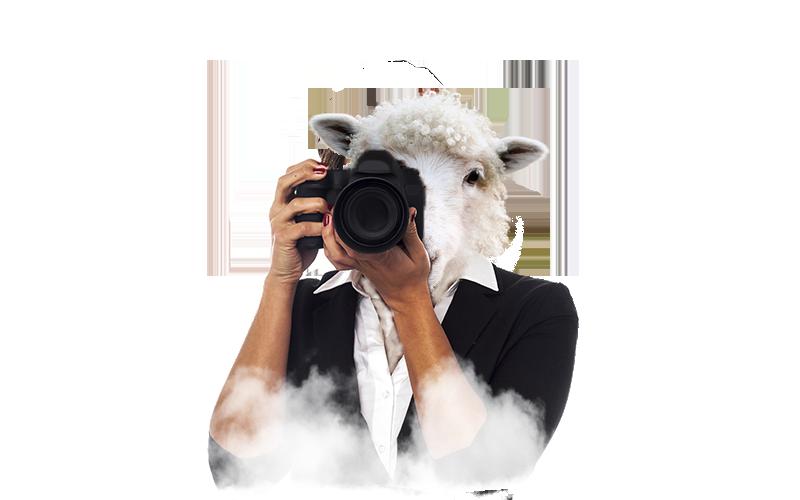 Oveja con cámara de fotos